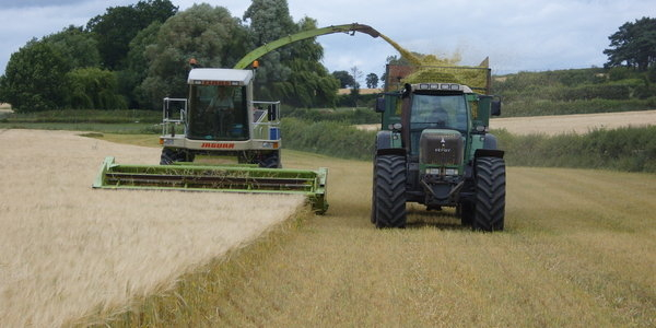 Foraging Wholecrop